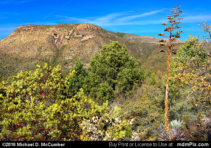 Armer Mountain (Armer Mountain Picture 042 - February 8, 2018 from Sierra Ancha Experimental Forest, Arizona)