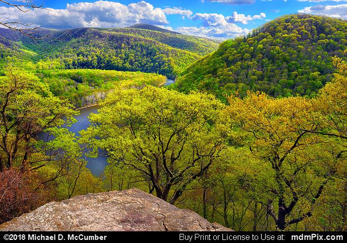 Spring Foliage at Laurel Highlands Trail Overlook
