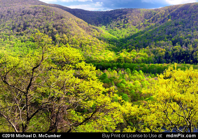 Laurel Ridge (Laurel Ridge Picture 004 - May 9, 2018 from Ohiopyle State Park, Pennsylvania)