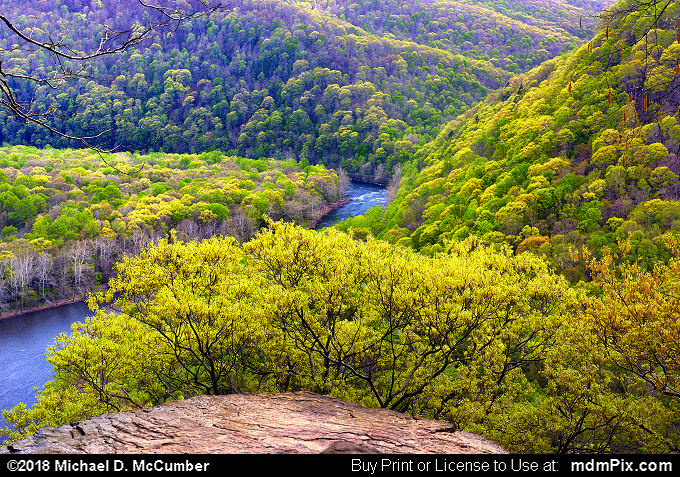 LH Trail's Youghiogheny River Gorge Vista (LH Trail's Youghiogheny River Gorge Vista Picture 005 - May 9, 2018 from Ohiopyle State Park, Pennsylvania)