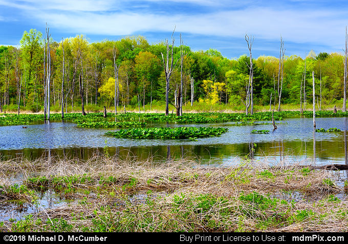 Lake Wilhelm Wetland (Lake Wilhelm Wetland Picture 001 - May 17, 2018 from Maurice K Goddard State Park, Pennsylvania)