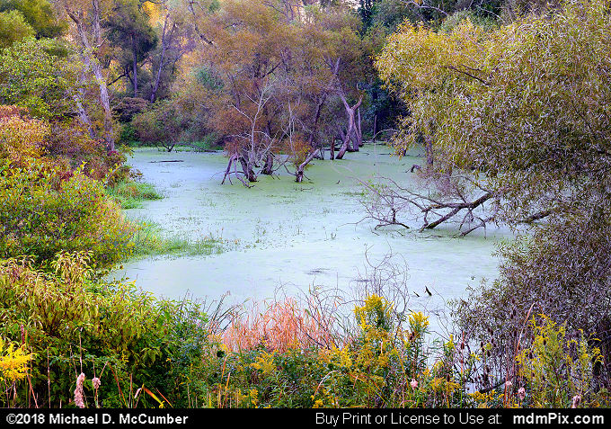 Algae Covered Pond (Algae Covered Pond Picture 005 - September 15, 2018 from Cranberry Township, Pennsylvania)
