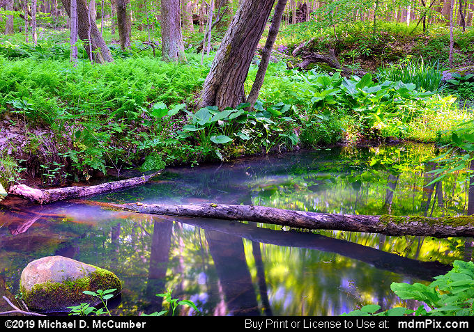 Vernal Pool and Spring Reflections at Miller Woods Preserve