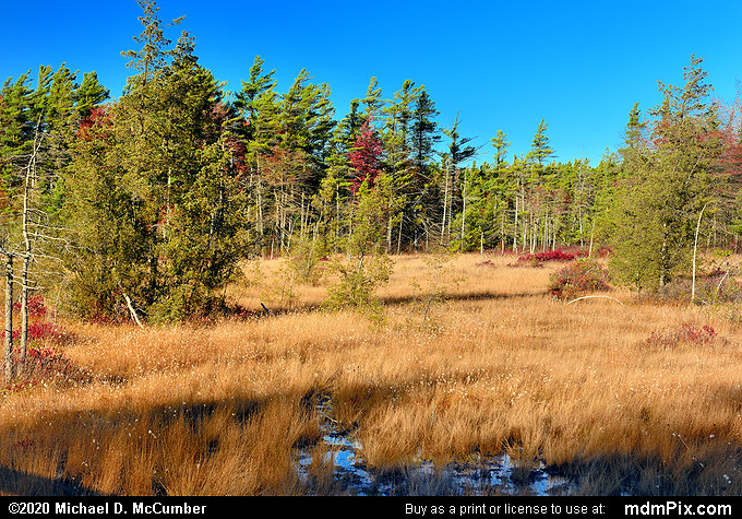 Spruce Flats Bog (Spruce Flats Bog Picture 004 - October 28, 2019 from Laurel Summit State Park, Pennsylvania)