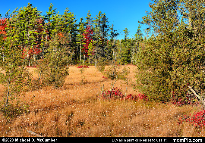 Spruce Flats Bog (Spruce Flats Bog Picture 008 - October 28, 2019 from Laurel Summit State Park, Pennsylvania)